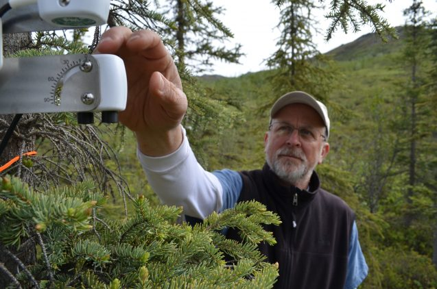 Lamont-Doherty plant physiologist Kevin Griffin checks an instrument designed to monitor a spruce tree's photosynthetic activity.