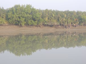 Sundarban Mangrove Forest at low tide.