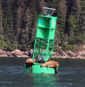 Wildlife may be attracted to devices as they are to this regular buoy.
