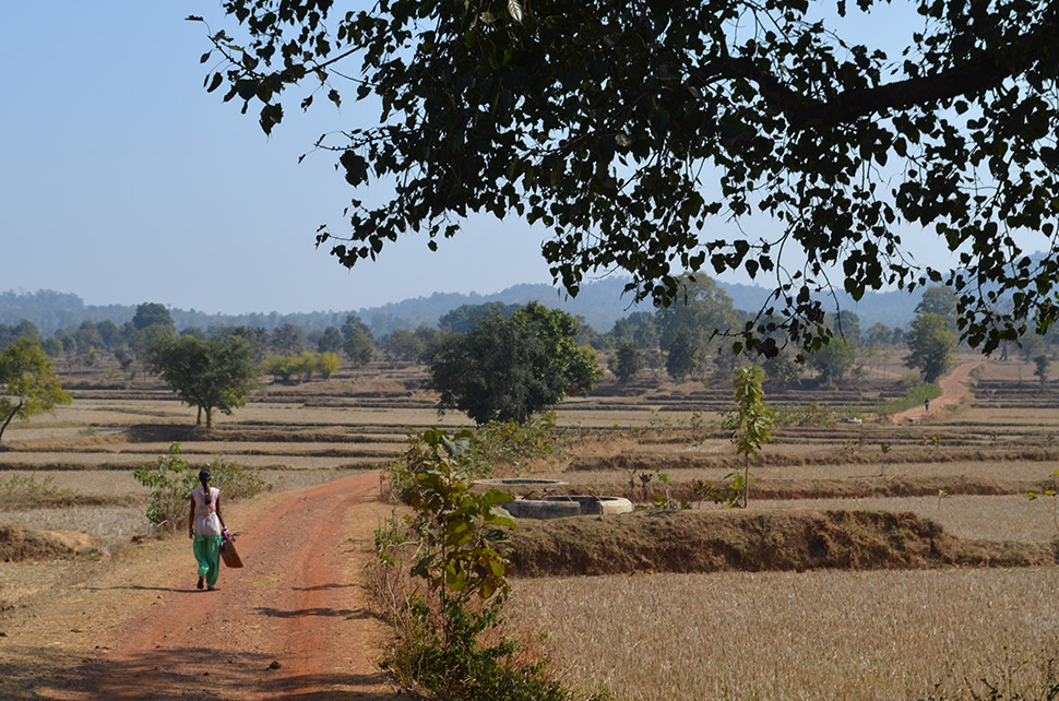 The Kanha Tiger Preserve is surrounded by a sea of farmland, to which many former forest dwellers have moved. Outside the village of Sayal Tikratola, many work small rice paddies and gardens for daily sustenance.