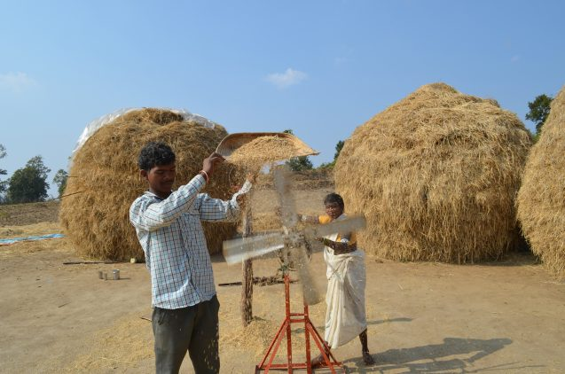 Food security is the No. 1 concern for resettled people. Above, in the village of Ramtila, Suresh Kumar and Jamni Bai separate rice from chaff. Below, neighbor Basanta Dhurve cleans the grains.