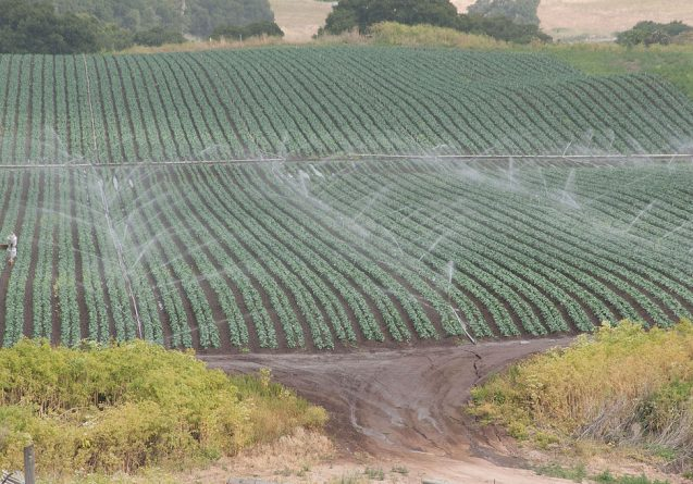 Irrigation in Salinas, Calif. Depletion of groundwater resources in the United States and other major food exporters could eventually threaten food security around the world, a new study says. Photo: U.S. Department of Agriculture