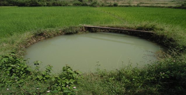Dobhas are small ponds that can help store water for use during the dry season.