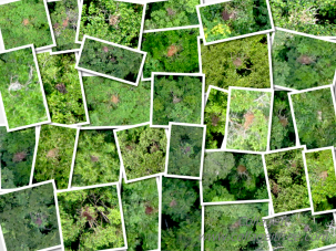 A collage of drone shots of orang-utan nests. Photo: conservationdrone.org