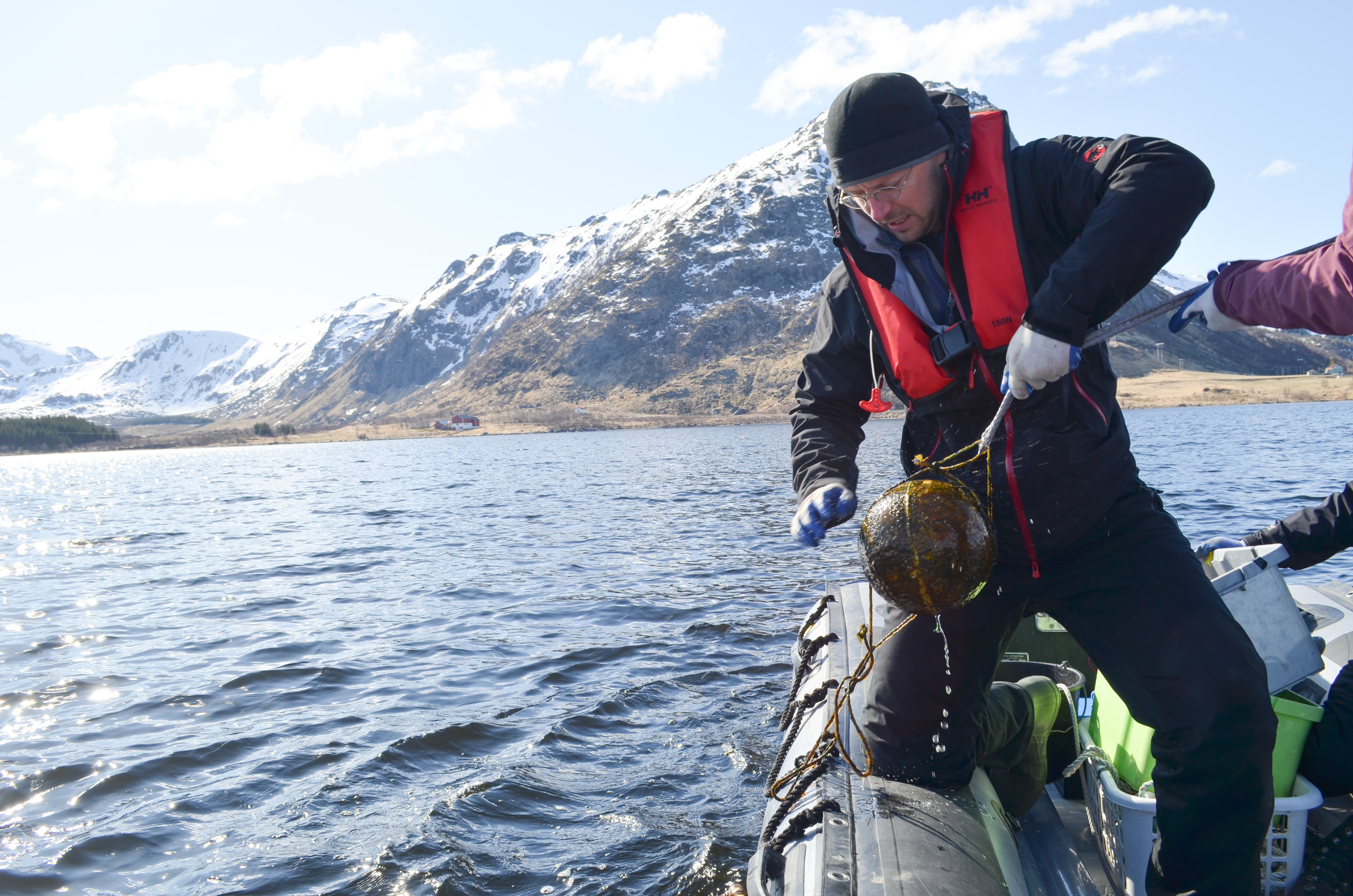 Scientists are plumbing the bottoms of lakes and bays in Norway's arctic Lofoten Islands to investigate the influence of climate and sea level on the Vikings. Climatologist William D'Andrea of Lamont-Doherty Earth Observatory hauls up a float that has been moored below the surface for several years. (All photos: Kevin Krajick)