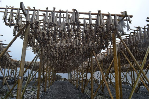 Top: Looking over the prow of a replica Viking ship; the originals were used for fishing as well as raiding. Bottom: Cod, drying on racks in the fishing village of Sund, were probably a staple for early islanders, and still are.