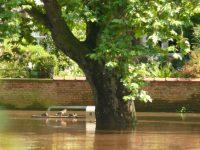 tree ducks flooding