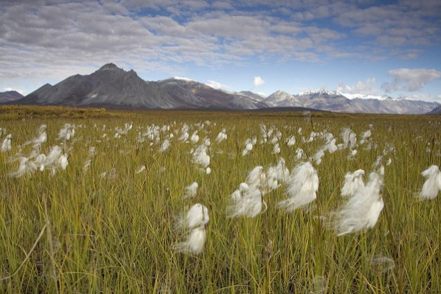 mountains and field in arctic national wildlife refuge