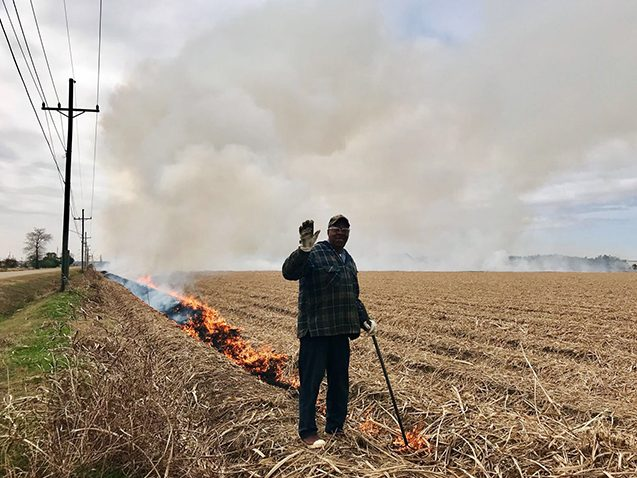 fire in an agricultural field