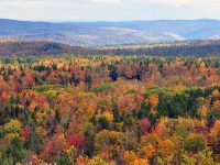fall foliage biodiversity