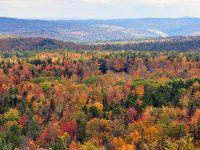 fall foliage biodiversity