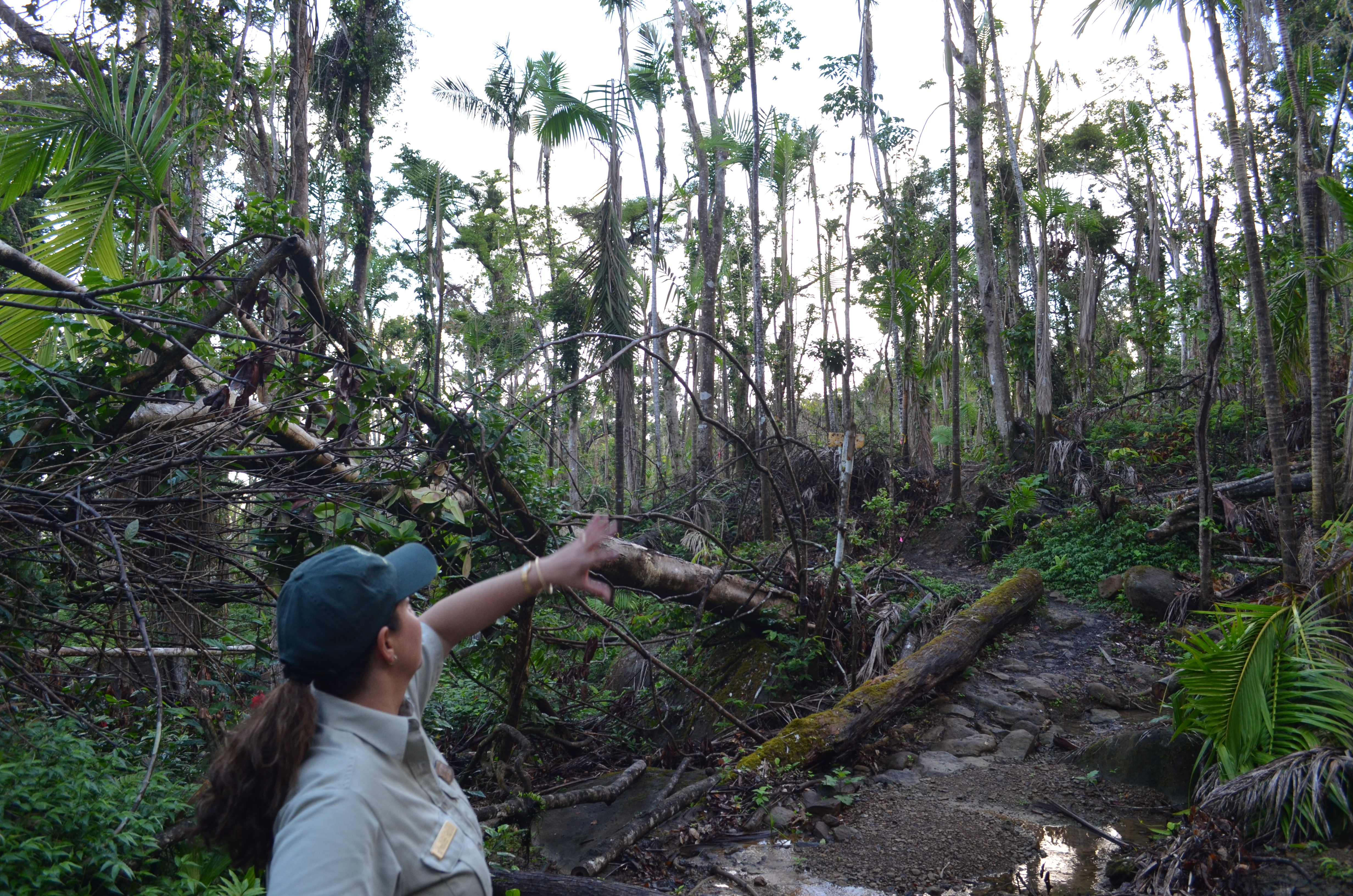 Climate Change and the Re-Greening of Puerto Rico