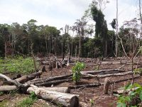 clearcut rainforest in Colombia