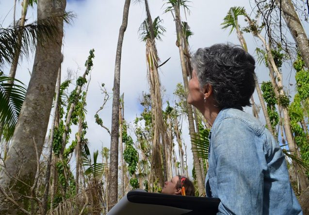 Maria Uriarte records damage to trees in puerto rico