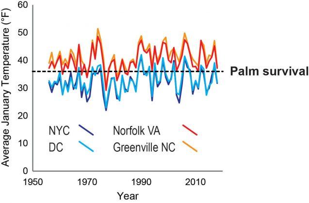average temperature vs palm tree survival