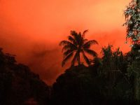 orange sky glows against palm trees near kilauea eruption