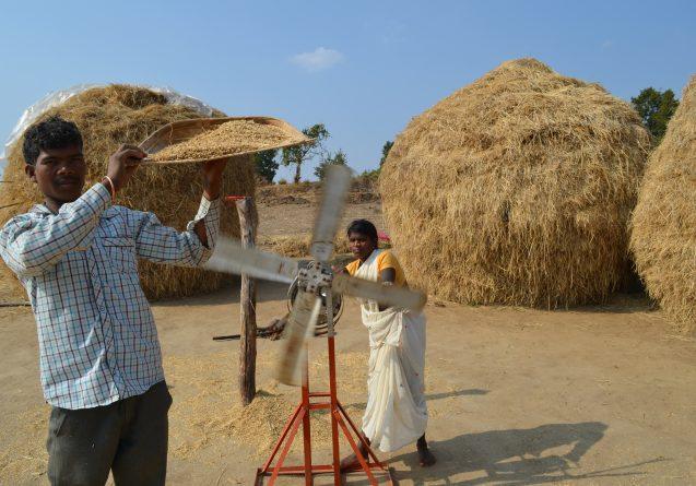 Rice farmers in India