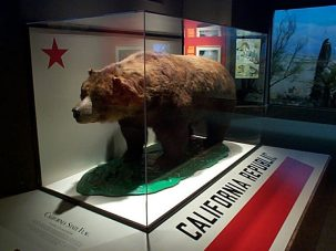 california grizzly bear behind museum glass