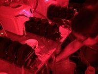 samples under red light
