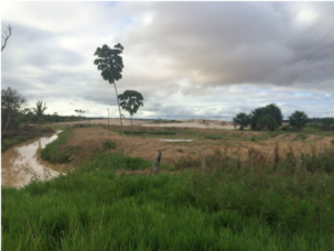 deforestation for gold mining