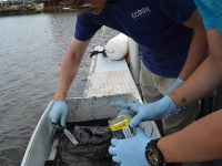 Study Finds Sewage Bacteria Lurking in Hudson River Sediments
