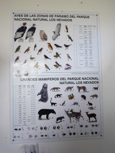 poster of animals