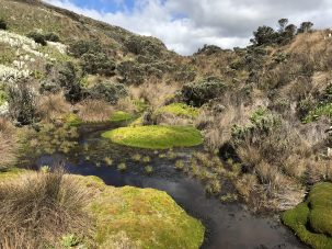 cushion bog in the paramos