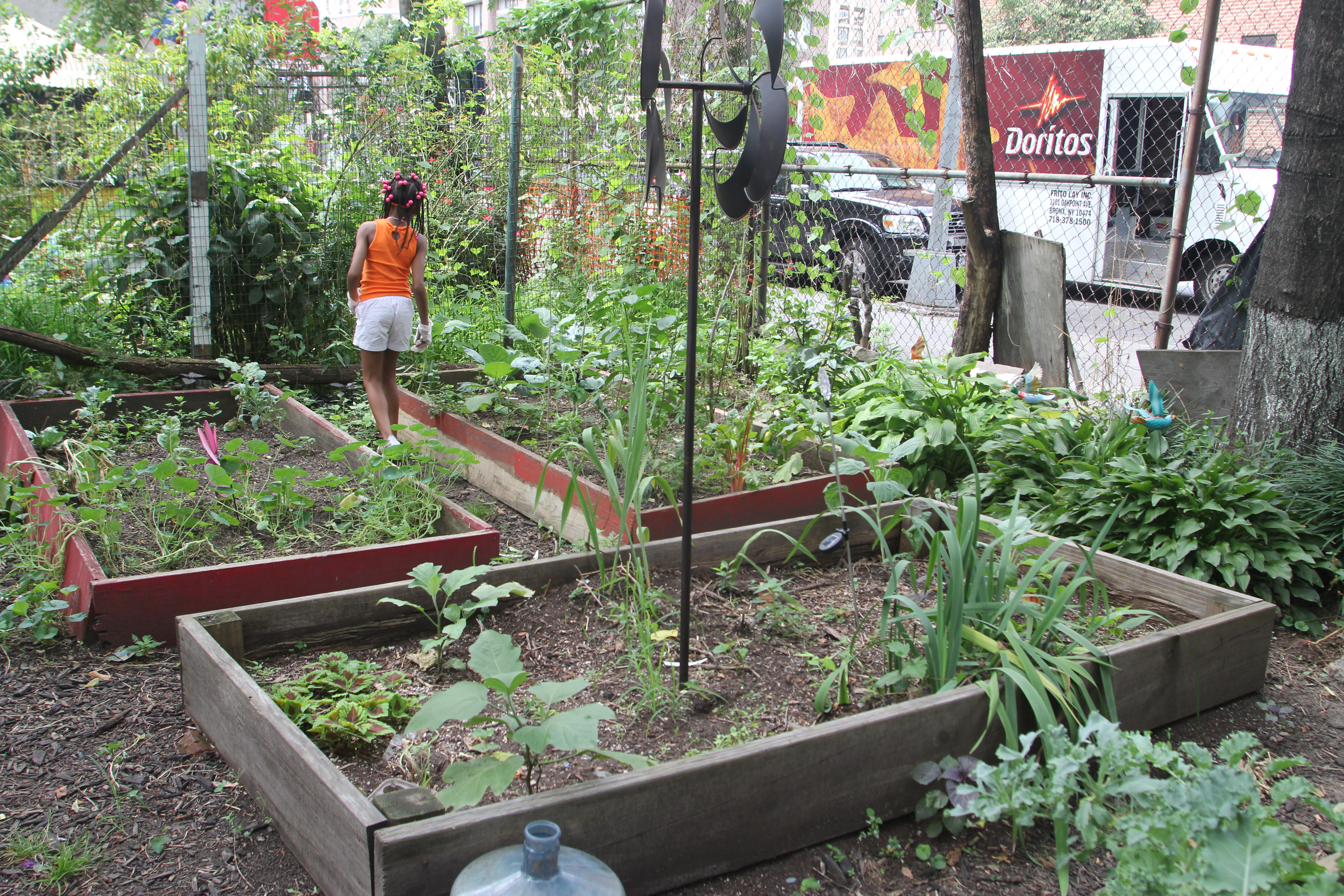 In East Harlem, Community Gardens Provide More Than Food