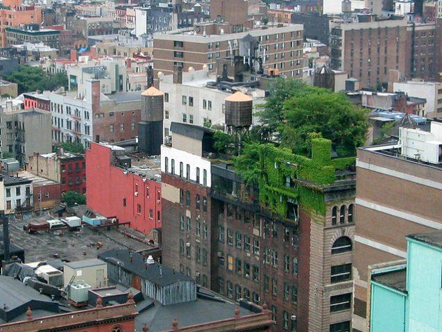 rooftop garden in new york city