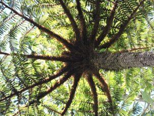 underside of tree fern
