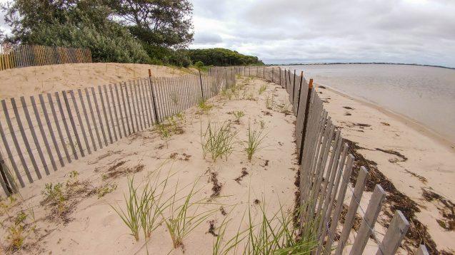 grass from the Coastal Habitat Restoration Project