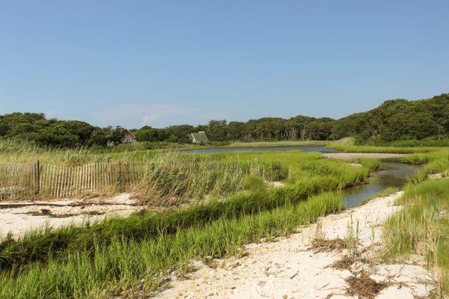 marsh after Coastal Habitat Restoration Project