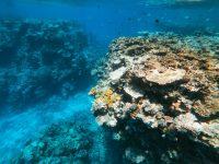 underwater ocean scene