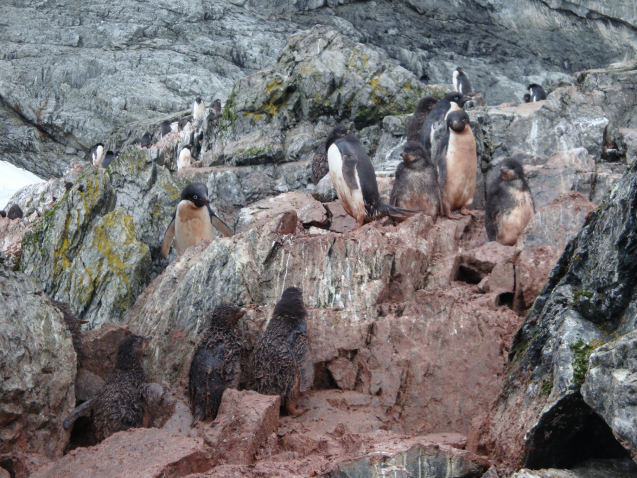 penguins on charcot island