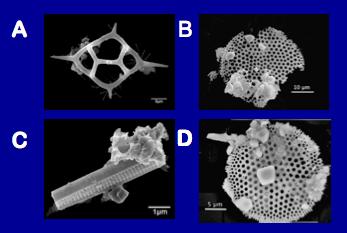 microfossil photos