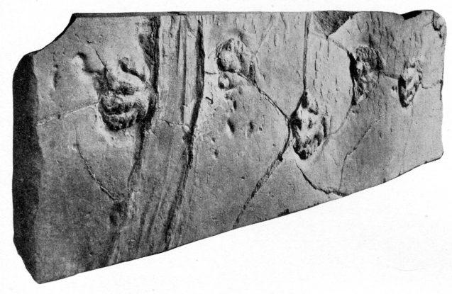 dinosaur footprints and sailing stone track