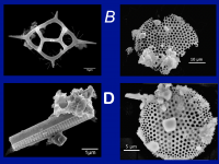 microfossil images