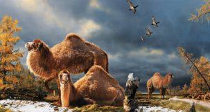 High Arctic camel. Julius T. Csotonyi