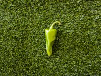 green pepper on fake grass