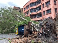 Tree toppled by Cyclone Amphan in Kolkata