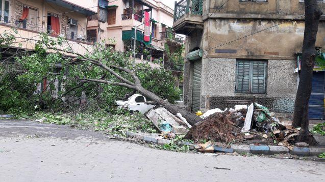 tree fallen on car in calcutta