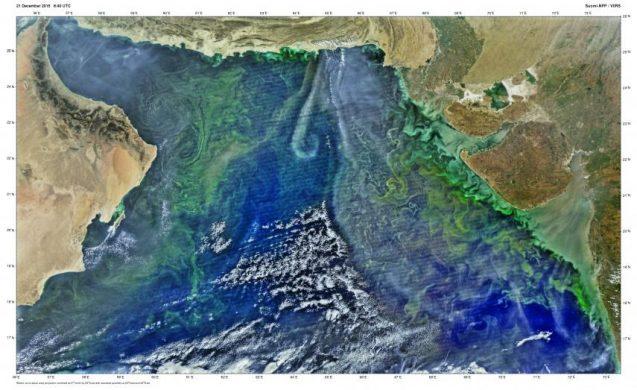 satellite image of noctiluca blooms in arabian sea