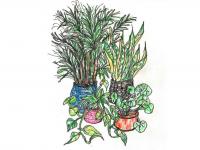 drawing of houseplants