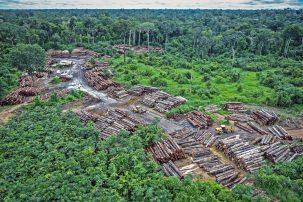 trees cut down in the Amazon