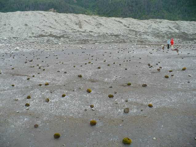 Moss balls on the Root Glacier