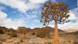 Succulent Karoo ecoregion