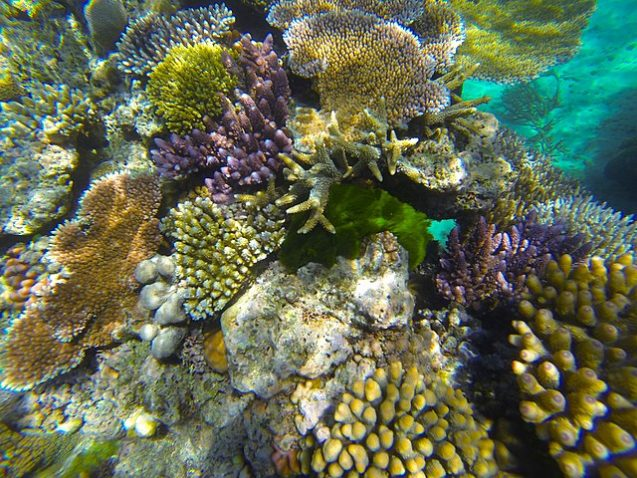 colorful corals under water