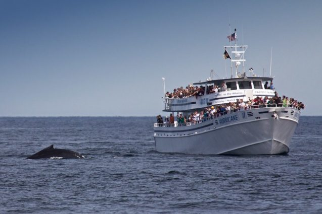 boat full of people watching a whale breach