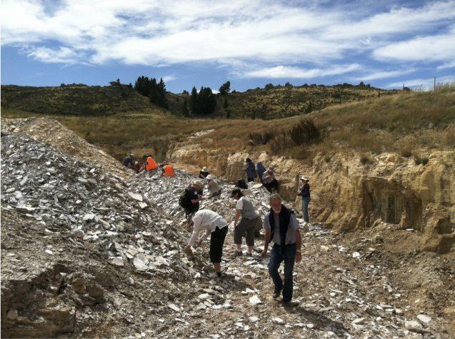Paleobotanists digging in rubble