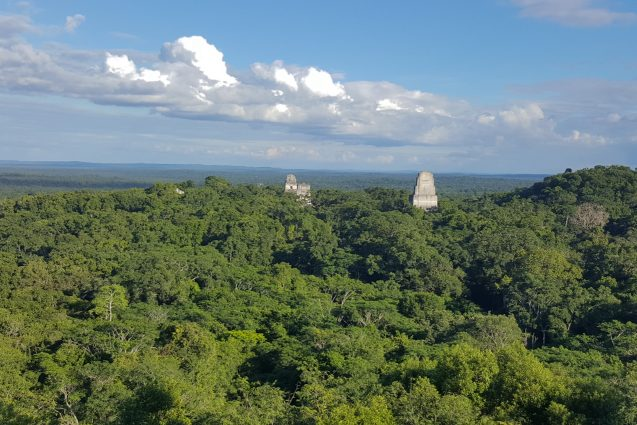 The tropical forest of the Maya Biosphere Preserve in Guatemala